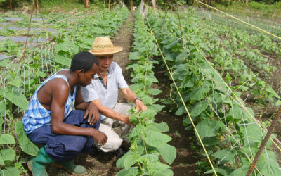 New Project in Saint Vincent and The Grenadines