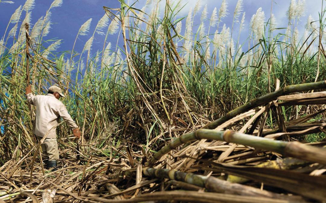 Climate Smart Agriculture in CARONI · Trinidad & Tobago