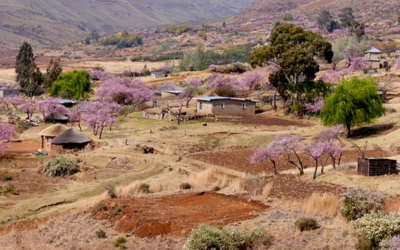 Oiko Logica in Lesotho